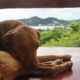 Baba's beautiful dog
