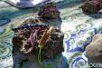 LOOTB at the Pitaya Festival in Hermosa Beach, Nicaragua