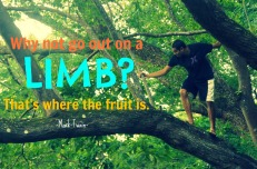 Why not go out on a limb? Thats where the fruit is. - Mark Twain
